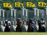 【京都新聞杯】登録馬 スマートオーディンなど21頭