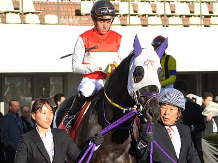 ショウナンマイティの手術が無事に終了。種牡馬入りは来シーズンからに (C)netkeiba.com