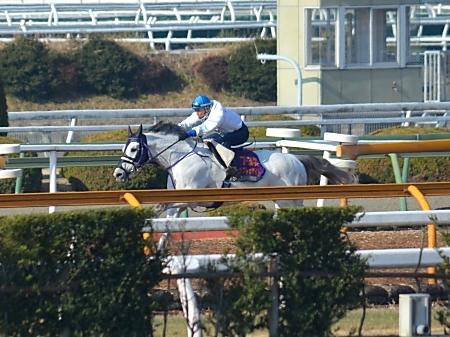 林騎手が落馬負傷のため、阪神SJは白浜騎手に乗り替わりとなるアップトゥデイト(撮影:井内利彰)