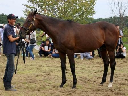 今年は35頭に種付け、種牡馬1年生として上々のスタートを切ったウインバリアシオン(撮影:花岡貴子)
