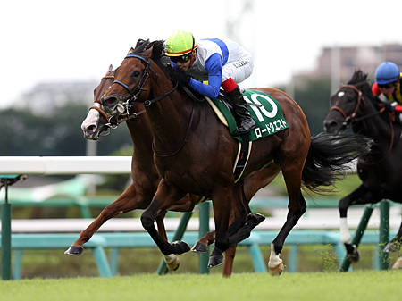 重賞連勝を狙うロードクエスト(写真は2016年京成杯AH、撮影:下野雄規)