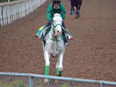 2度の競走除外からゲート再試験にも無事合格し、順調に調整されている白毛のブチコ(撮影:井内利彰)