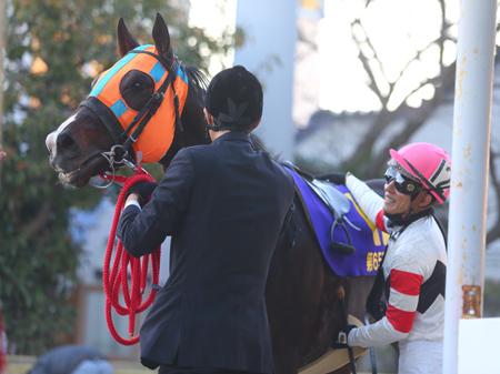 ホッコータルマエはチャンピオンズCの出走を回避し、予定されていた大井競馬場での引退式も中止となった(撮影:高橋正和)
