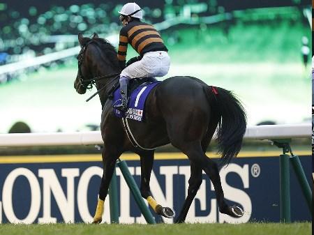 グランプリ・有馬記念にはジャパンCを制したキタサンブラックらが登録(撮影:下野雄規)