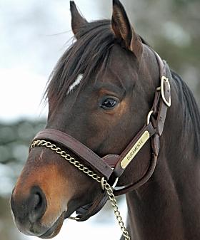 ラメンテ ドゥ [新種牡馬]ドゥラメンテ産駒の傾向と対策 【馬体の見かた講座】