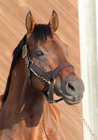 日本軽種馬協会静内種馬場に到着した新種牡馬マクフィ
