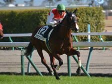 【結果発表】ショウナン名付け親企画 2歳馬25頭の馬名決定