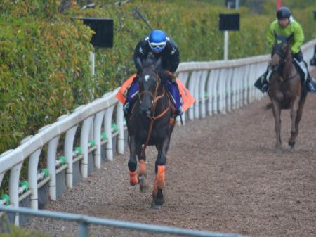 皐月賞に向けた最終追い切りを坂路で行ったファンディーナ(4月11日撮影:井内利彰)