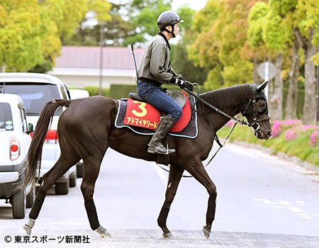 載冠への機は熟したアドマイヤリード(写真提供:東京スポーツ)