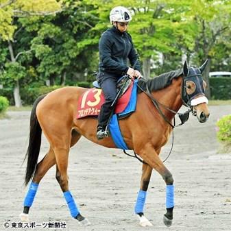 東京競馬場に前日入りを予定しているフロンテアクイーン(写真提供:東京スポーツ)