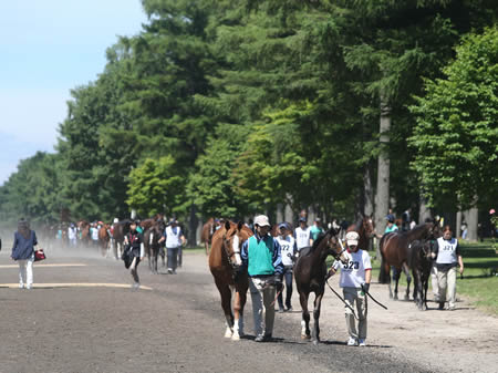 当歳馬展示終了後の引き揚げ場面(写真は2016年セレクトセール、撮影:田中哲実)