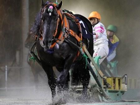 昨年の覇者・オレノココロはファン投票1位で堂々のばんえいグランプリ出走(写真提供:ばんえい十勝)