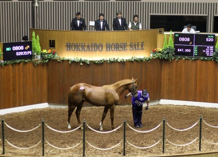 サマーセール3日目、北海道静内農業高校の生産馬「北斗」はJRAが落札した