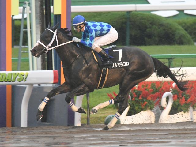 秋山真一郎騎手騎乗のブルミラコロが勝利(c)netkeiba.com