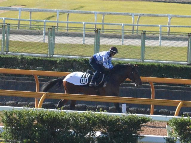 ロードカナロア産駒のミッキーワイルドは厩舎の期待値も高い(撮影:井内利彰)