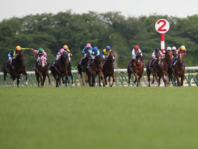 古馬が強さを見せるマイルCSの好走条件とは(撮影:下野雄規)