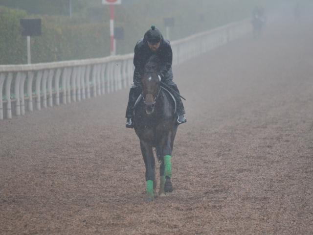 皐月賞馬アルアインの全弟、ダノンマジェスティが入厩(撮影:井内利彰)