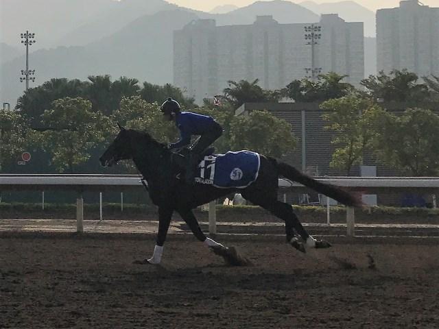 香港マイルがラストランとなることが発表されたサトノアラジン(撮影:花岡貴子)