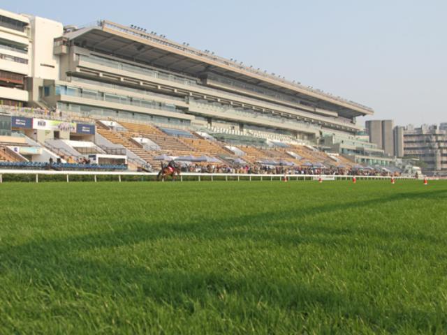 まったく雨が降っておらずシャティン競馬場は絶好の馬場状態(撮影:斎藤修)