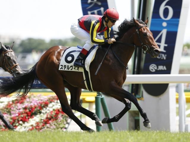 サウジアラビアRC2着馬ステルヴィオはC.デムーロ騎手と新コンビ(撮影:下野雄規、(C)netkeiba.com)
