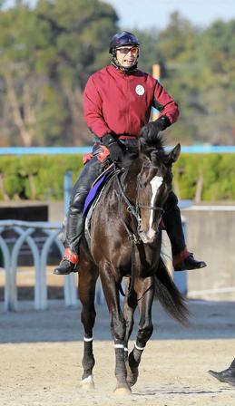 メンバー唯一の無敗馬ダノンプレミアム