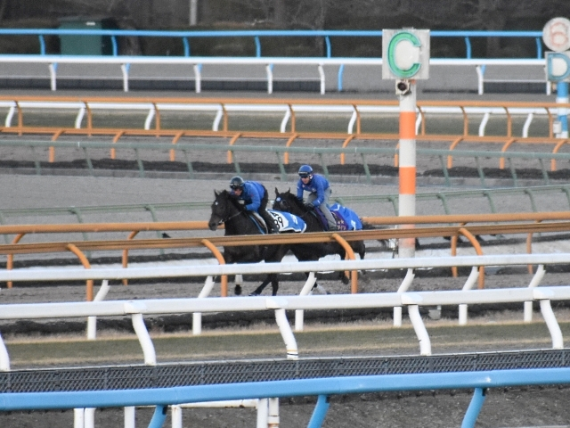 1月24日に京都記念の2週前追い切りを行ったアルアイン(写真奥、撮影:井内利彰)