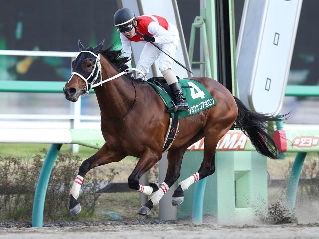 今日24日付で競走馬登録を抹消し、今後はJRA競馬学校で乗馬となるショウナンアポロン(撮影:下野雄規、(C)netkeiba.com)