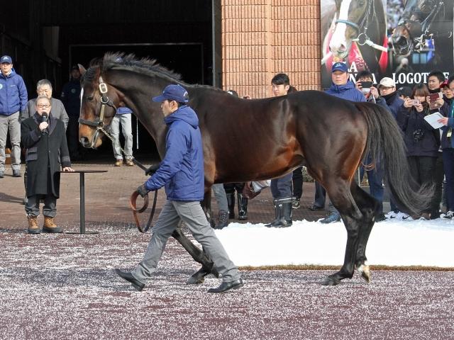 新種牡馬のキタサンブラック