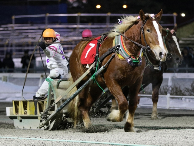 鈴木恵介騎手騎乗の1番人気ミスタカシマが勝利(写真提供:ばんえい十勝)