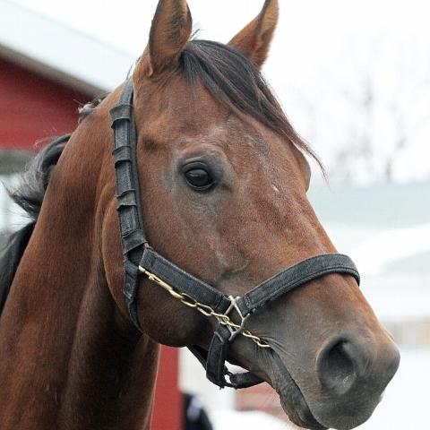 Wildcat Heir産駒ルックスザットキルが引退、種牡馬に