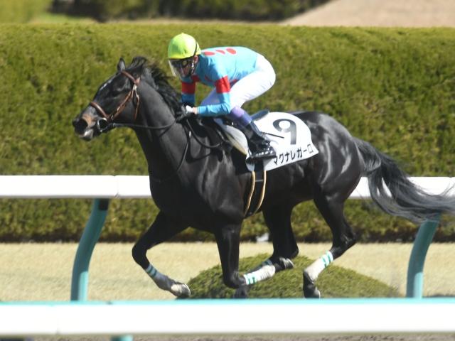 武豊騎手騎乗の3番人気マグナレガーロが優勝