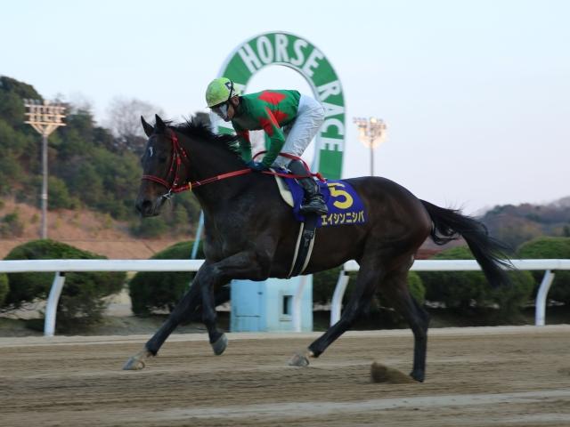 田中学騎手騎乗のエイシンニシパが勝利(写真提供:佐賀県競馬組合)