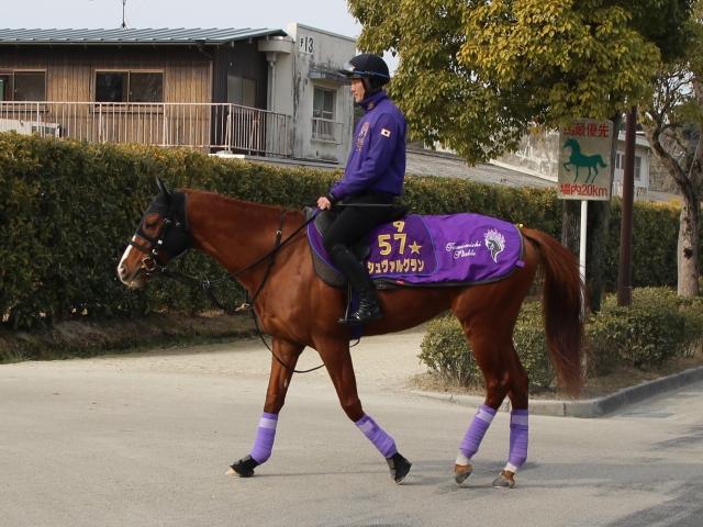 大江助手が「調教はまったく動かない馬、というレッテルははがしてもらっていい」と語るシュヴァルグラン(撮影:花岡貴子)