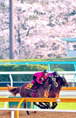 満開の桜をバックに栗東CWを駆けるラッキーライラック(手前)
