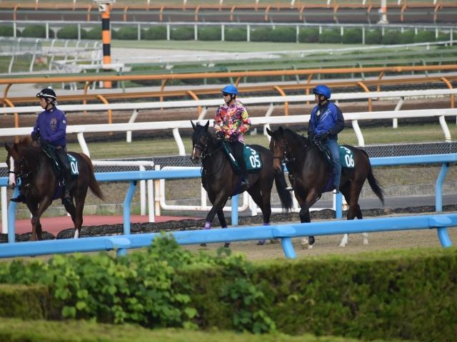 ゲート試験を一発合格したブラヴァス(撮影:井内利彰、ゼッケン305番)