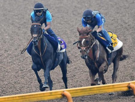 美浦Wで宝塚記念2週前リハを行ったサトノクラウン(左)とアルバート