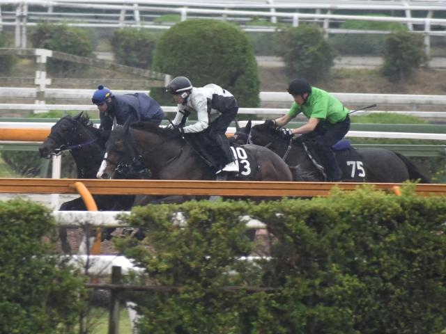 初戦でどんな走りを見せてくれるか楽しみなロードワンダー(撮影:井内利彰)