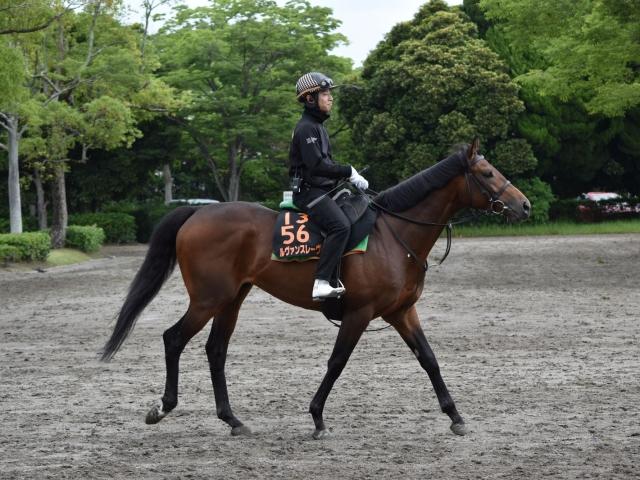 乗りなれた鞍上に戻り、巻き返しを狙うルヴァンスレーヴ(撮影:佐々木祥恵)