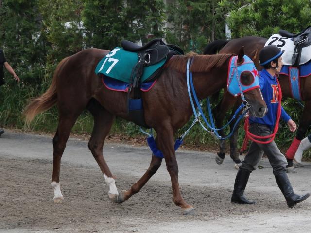 今週注目している新馬のマイネルメーア(撮影:花岡貴子)