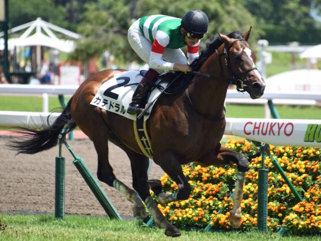 福永祐一騎手騎乗の4番人気カテドラルが新馬勝ち