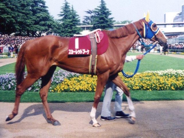 1992年京王杯SC出走時のスカーレットブーケ(ユーザー投稿写真:カケルショウグンさん)