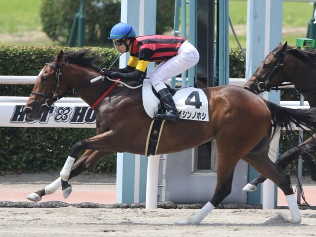 松山弘平騎手騎乗のエイシンノホシが新馬勝ち