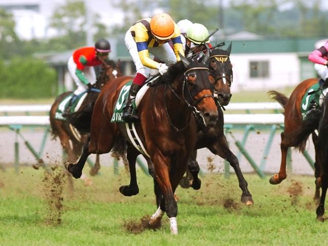 川崎の河津裕昭厩舎に移籍したガリバルディ(写真は2016年中京記念優勝時)