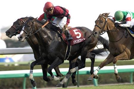 種牡馬を引退し乗馬となることが決まったバランスオブゲーム。写真は06年オールカマー時(撮影:下野 雄規)