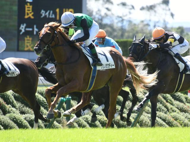 スクリーンヒーロー産駒のクリノガウディーが新馬勝ち