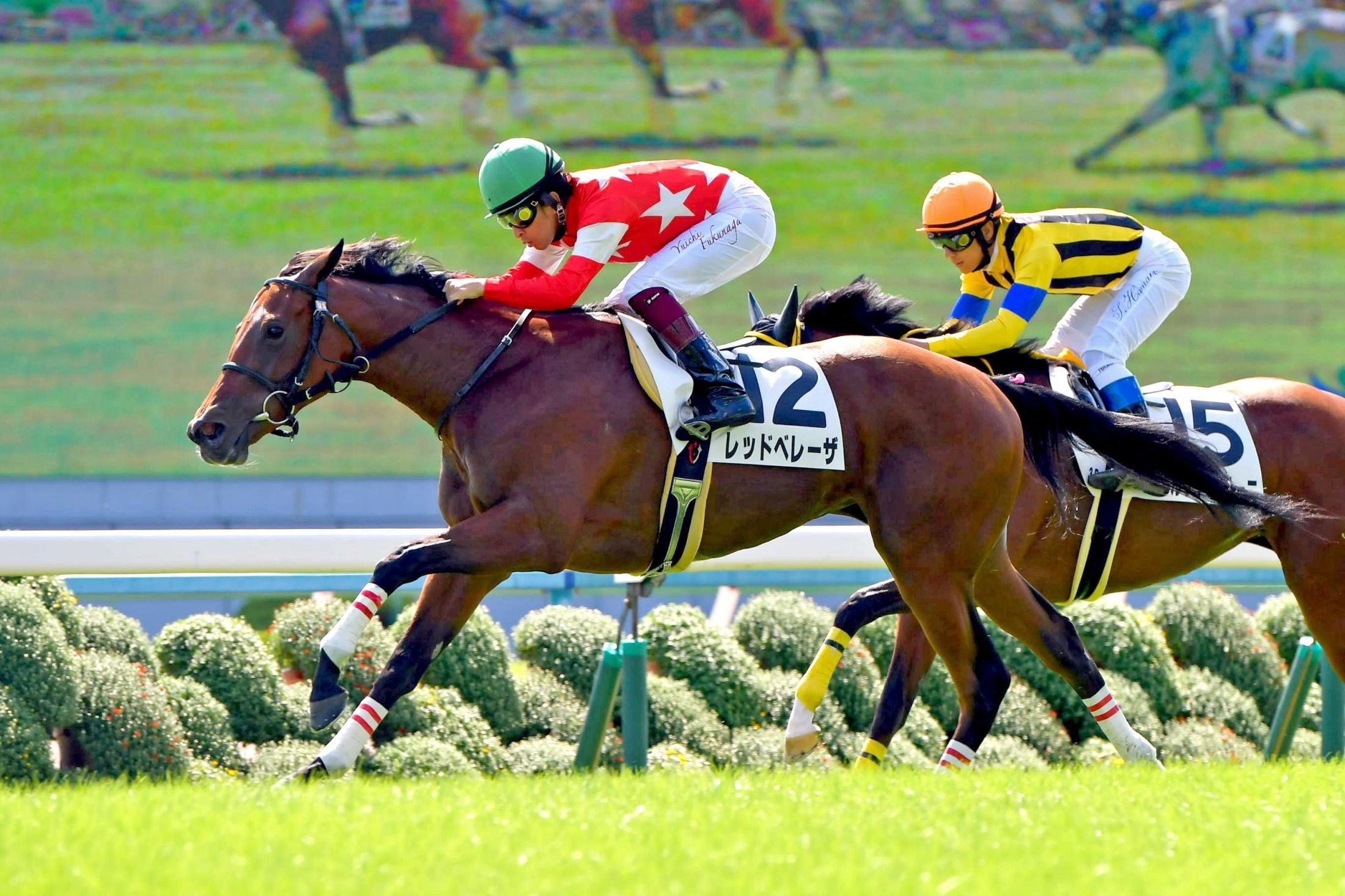 新馬戦を快勝したレッドベレーザ