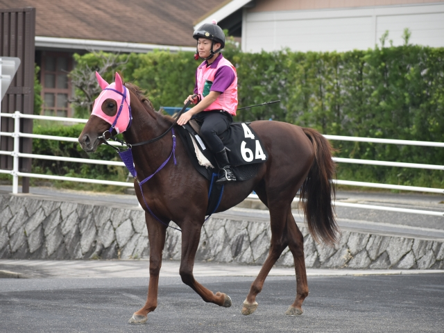 重賞3勝を挙げたショウリュウムーンの初仔、ショウリュウイクゾが帰厩(撮影:井内利彰)