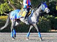 【コーフィールドC】チェスナットコート&ソールインパクト 日本馬に好ムード漂う