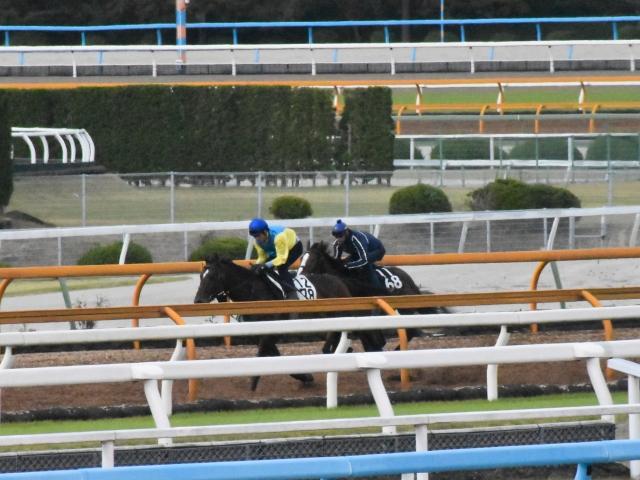 10月31日のCWはC.ルメール騎手が跨っての追い切りだったレティキュール(撮影:井内利彰)