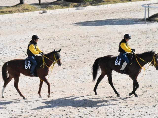 Dubawi産駒のベストピクチャー(写真左)がゲート試験に合格(撮影:井内利彰)